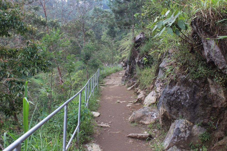 Path leading through jungle, with metal banister on one side