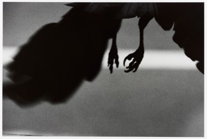 a black and white photo, feet of a crow