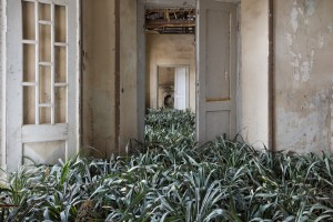 Large grass fills a hallway of an empty house in disrepair.