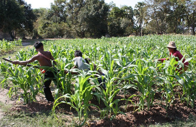 A family farm in Cambodia