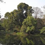 One of the lakes created in the centre of the Royal Botanic Garden, Calcutta, during the 1880s, now known as the Acharya Jagadish Chandra Bose Indian Botanic Garden in Shibpur, Howrah