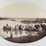 Bathing Elephants by Donald Horne Macfarlane, 1862