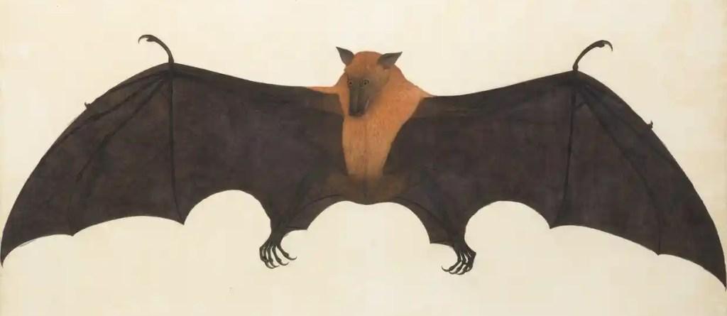 A Great Indian Fruit Bat, or Flying Fox, Calcutta; Bhawani Das, c. 1777-1782