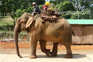ミャンマー カチン州の象