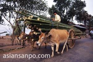 カンボジア クラチエの牛車