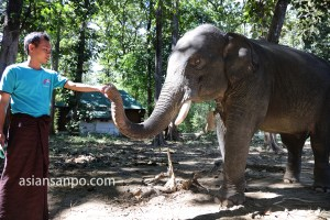 ミャンマー Phee Kyaw Elephant Camp