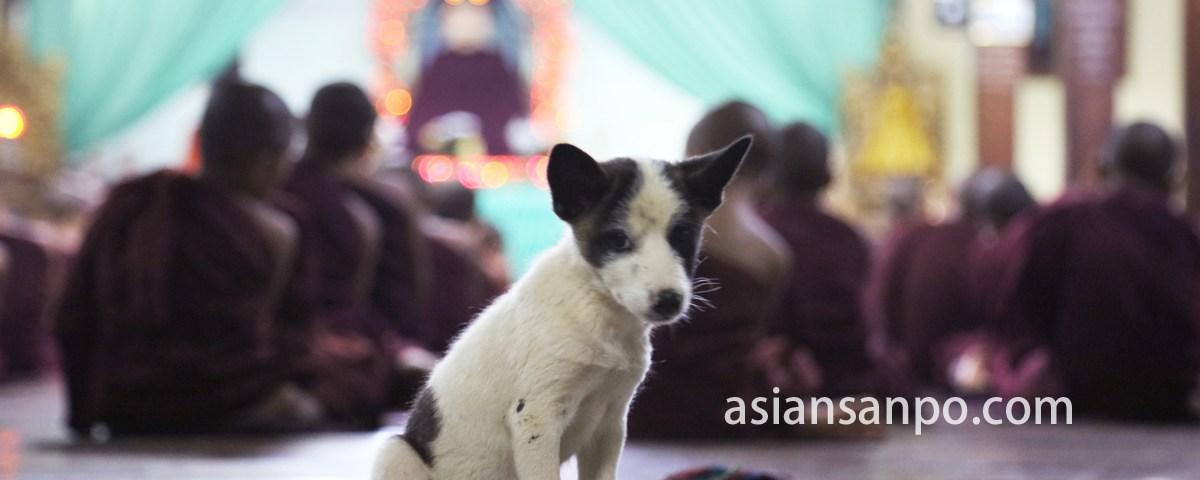 ミャンマー ロイコーの僧院の犬