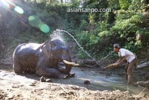 ミャンマー 象キャンプ