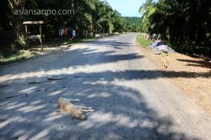 ミャンマー ボーピン-コータウン 犬