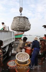 ミャンマー ベイ 魚市場