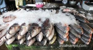 ミャンマー パアン 市場 魚
