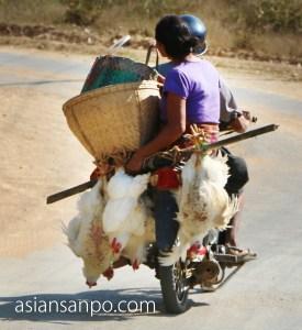 ミャンマー チャオピューーンガパリ 鶏