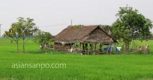 ミャンマー ヤンゴンーネピドー 農家