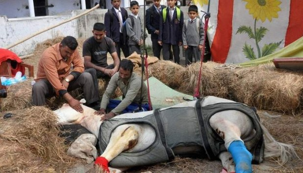 Case withdrawn against BJP MLA for 'killing' police horse Shaktiman
