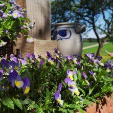 Kwiaty przedstarym drewnianym domem