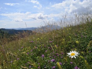 łąki góry Alpy Bergamskie Dolina Brembana