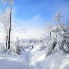 klimczok, Błatnia, szlak, las, zima