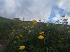 Kwiaty, szczyt, Monte Stivo