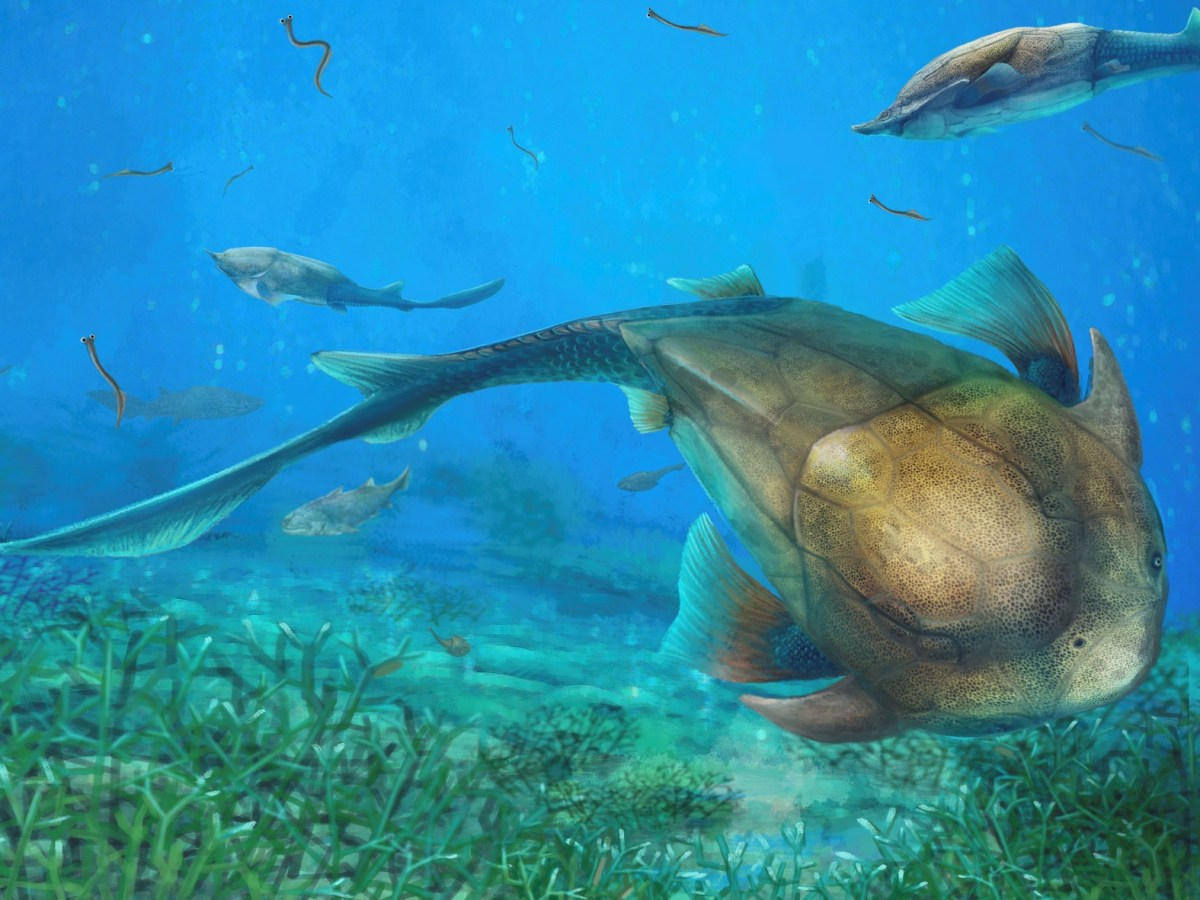 Illustration of an armored fish called Qilinyu that lived 423 million years. A fossil of the fish was unearthed in China's Yunnan province. Photo: Dinghua Yang/Chinese Academy of Sciences via Reuters