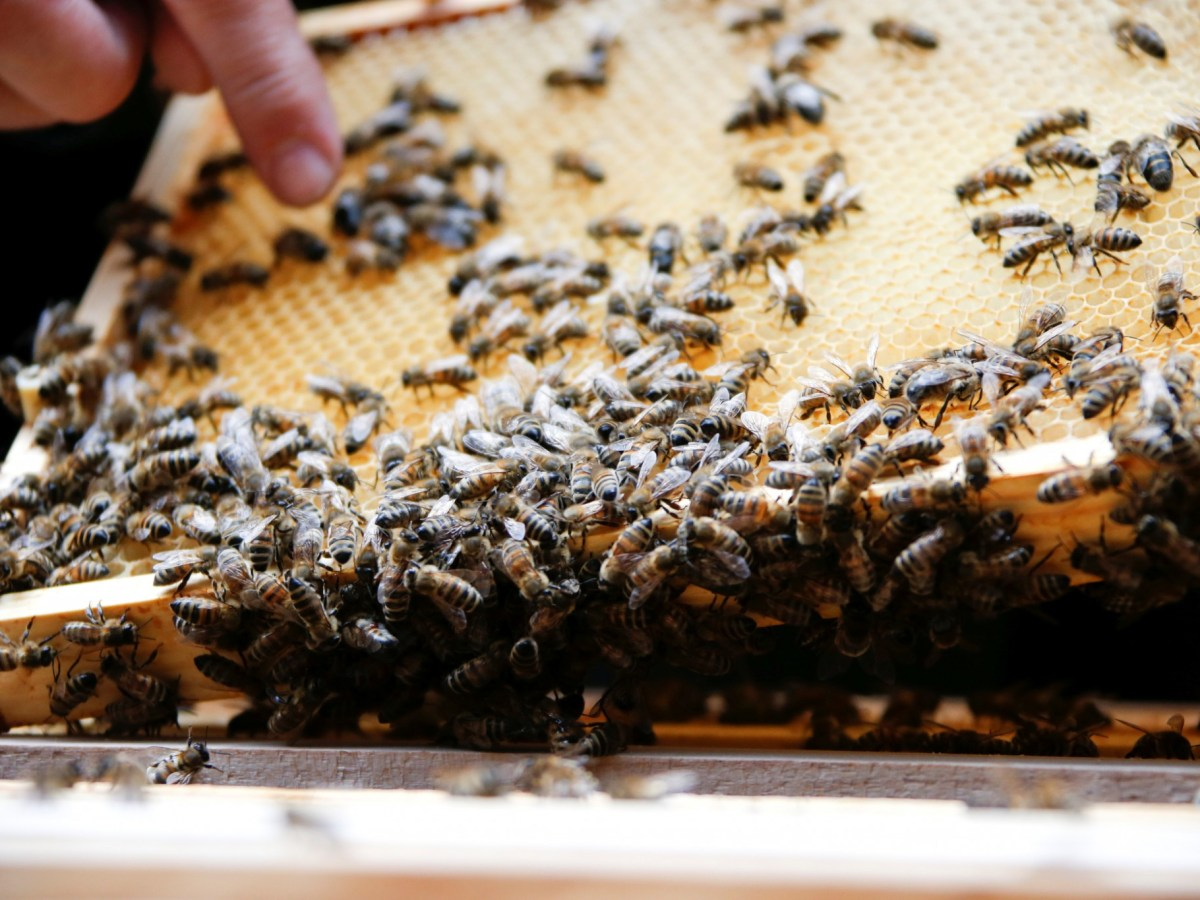 Beekeepers in Taiwan say it is hard to fully capitalize on the rise in demand for honey as climate change and disease hamper beehive expansion. Photo: Reuters archive