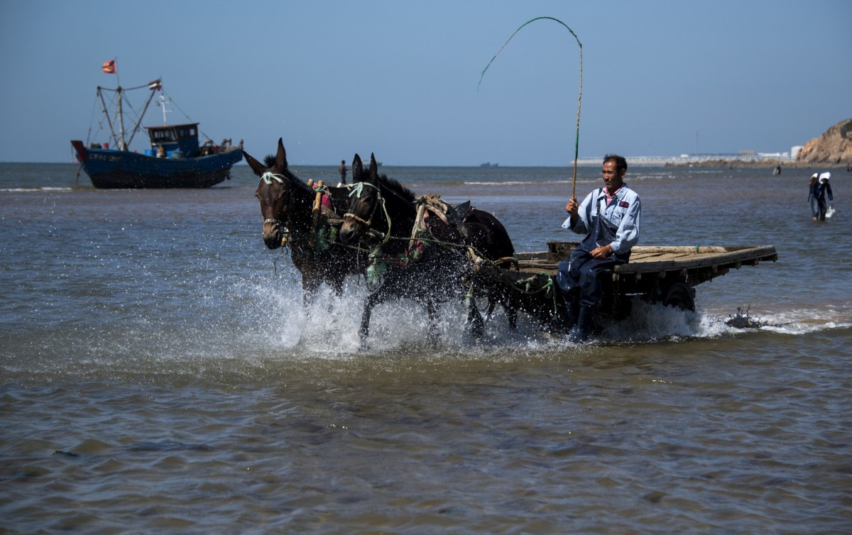 Qin Yusheng steering his mule drawn cart across the beach in Xianrendao. Photo: AFP/Johannes Eisele