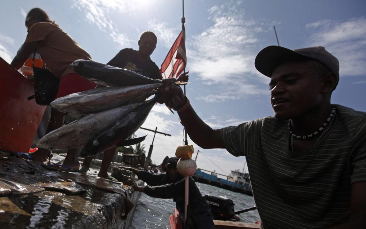 A fisherman unloads tuna at the main market in central Honiara. Photo: REUTERS/Daniel Munoz