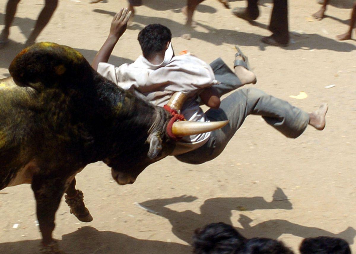 'Jallikattu' in action. Photo: AFP / Dibyangshu Sarkar