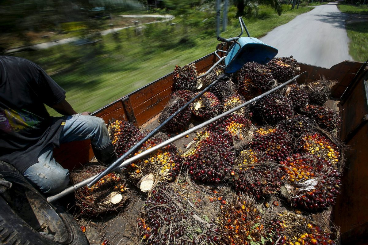 Palm oil fruits on a truck. Photo: Reuters/Samsul Said
