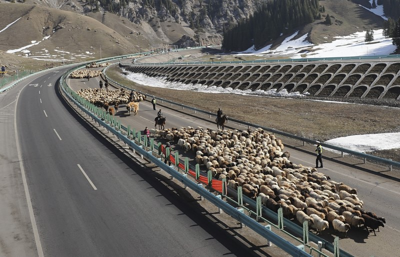 Shepherds lead their flocks of sheep and cattle along on the Guozigou segment of the Lianyungang-Horgos expressway as vehicles drive past the other side of the expressway, in Xinjiang Uyghur autonomous region, March 24, 2013.. REUTERS/China Daily