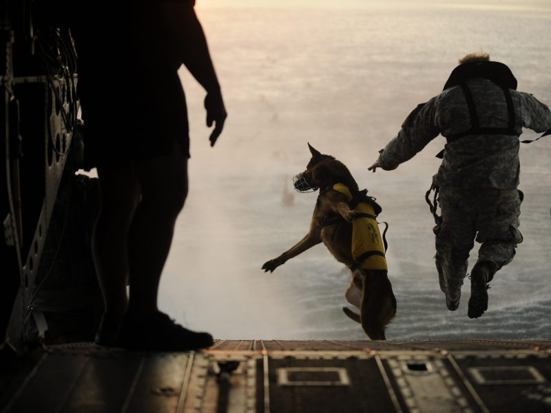 I'll be doggone... quality over quantity counts. Even in the canine corps. Photo: Reuters