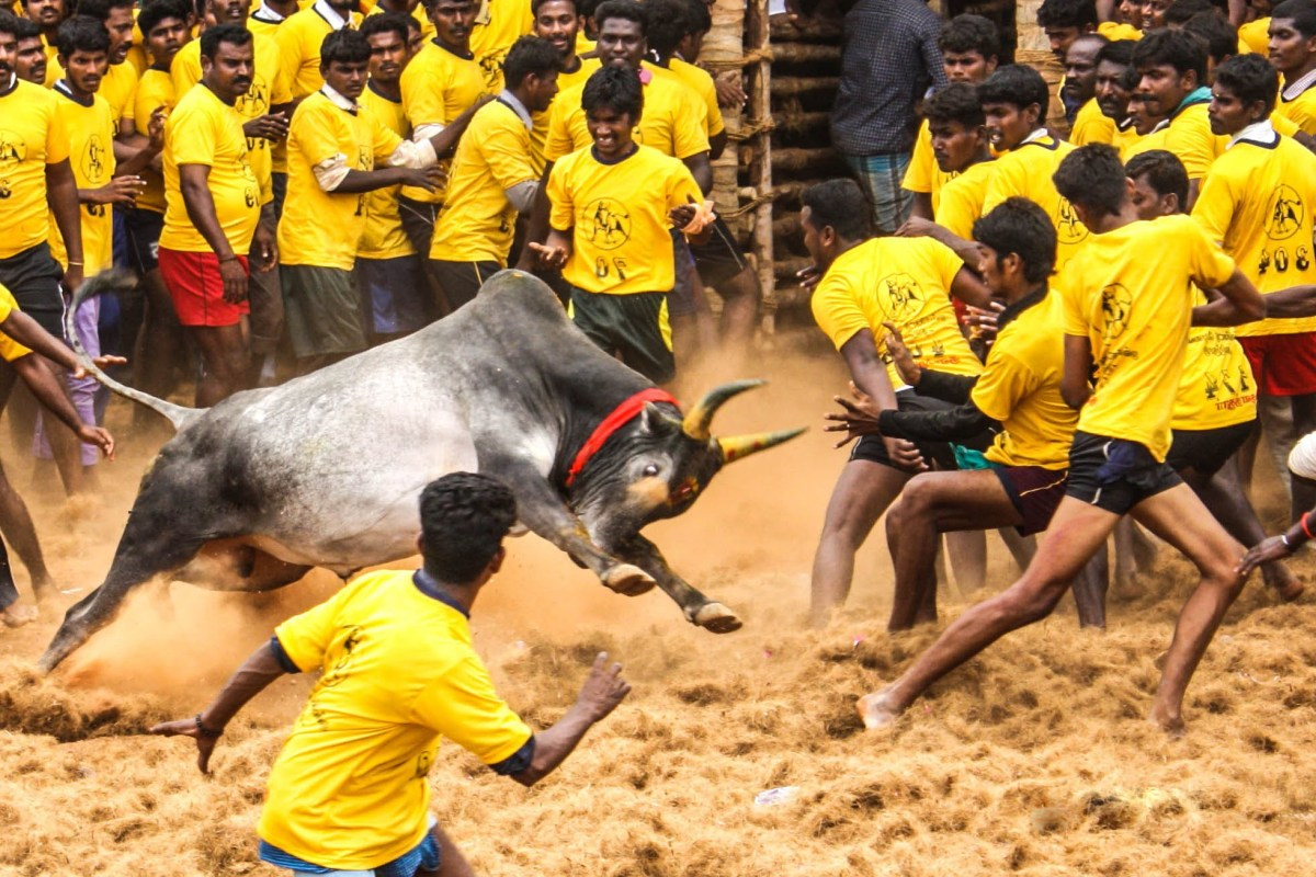 For Tamils, the centuries-old rural sport jallikattu is integral to their culture