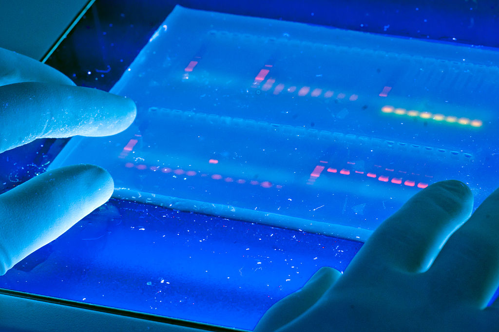 Treasure trove: Chinese companies are scraping big data on genetics, lifestyle and medical treatment in search of the Next Big Thing. Photo: Wikimedia Commons