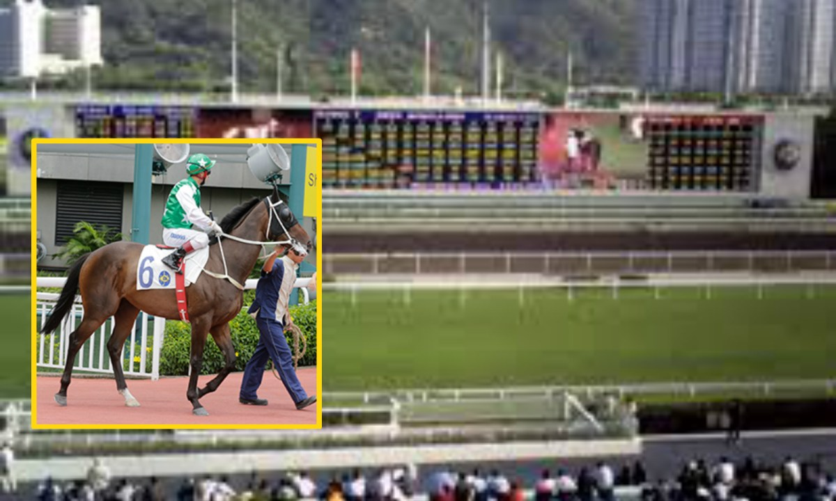 Pakistan Star (inset) will participate in the Hong Kong Derby on Sunday. Photo: Wikimedia Commons, Hong Kong Jockey Club