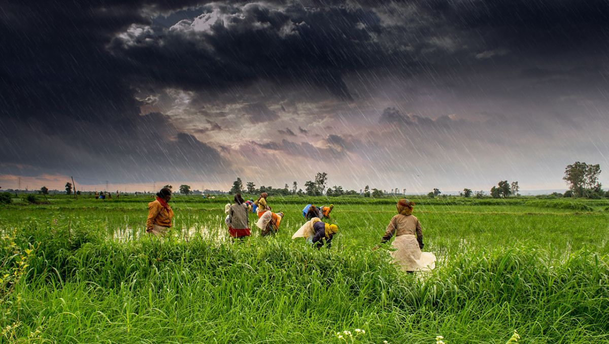 Farmers at work in Madhya Pradesh during India's monsoon season. Photo: Wikimedia Commons / Flickr / Rajarshi MIitra