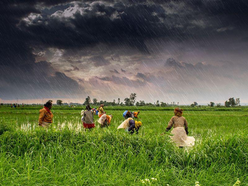 Farmers at work in Madhya Pradesh during India's monsoon season. Photo: Wikimedia Commons / Flickr / Rajarshi MIitra