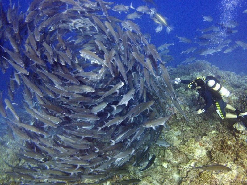 "Under threat: A swirling school of jack fish in the Spratly Islands of the South China Sea. The island chain is part of 600 islands, reefs and shoals environmentalists consider a biodiversity ""hotspot."" Photo: Reuters/David Loh"