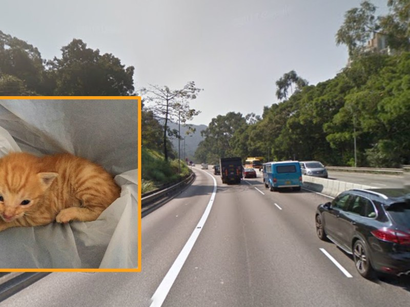 A fireman saved a kitten (inset) on Lion Rock Terminal Road in Sha Tin. Photo: Google Map, Kevin Kwok/ Facebook