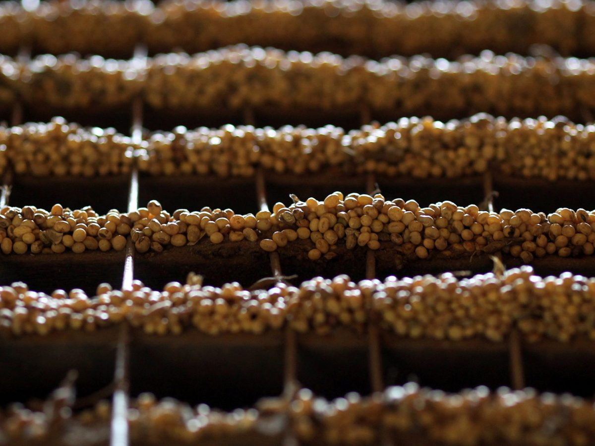 Soy grains are seen on the floor of the Alvorada agricultural industry in the city of Primavera do Leste, in the central Brazilian state of Mato Grosso.  Photo: Reuters/Paulo Whitaker