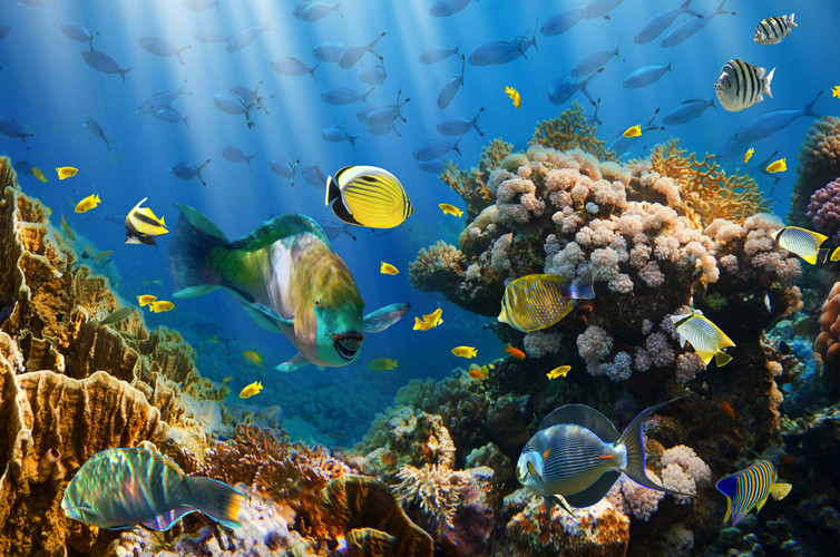 There are a number of ways the global community can protect the oceans. Photo: Shutterstock
