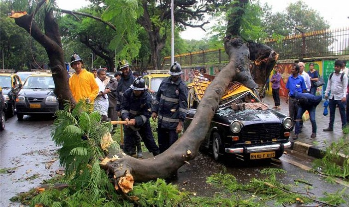 Two elderly people were injured when a tree landed on their taxi in Mumbai. Photo: India.com