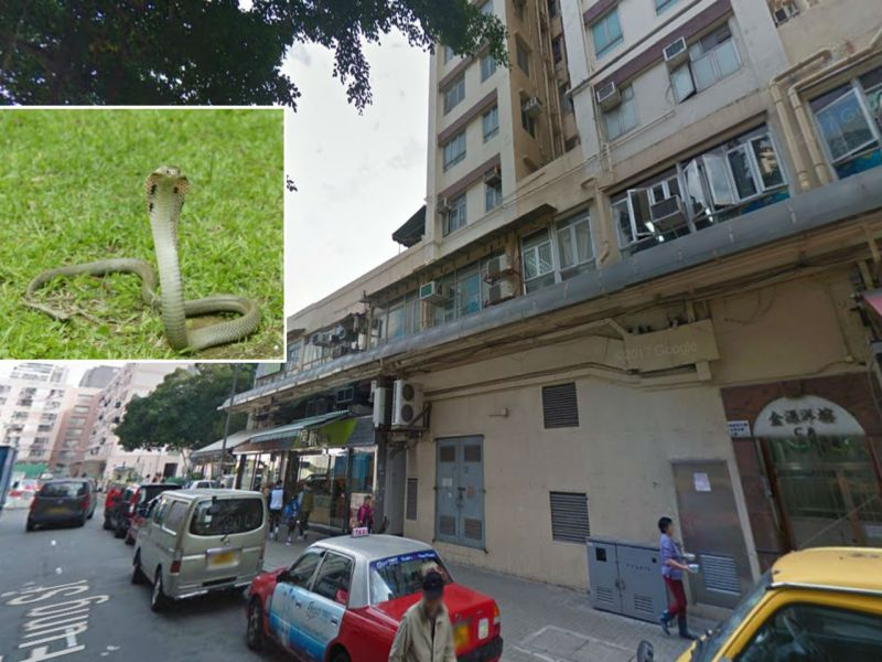 A Chinese cobra (inset) was found inside a Chai Wan residential building. Photos: Google Maps, AFCD