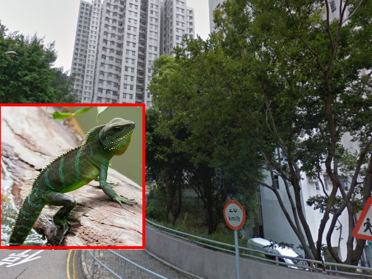 A small Chinese water dragon (inset) and Wong Tai Sin in Kowloon. Photo: Google Maps, Wikimedia Commons, Rushenb