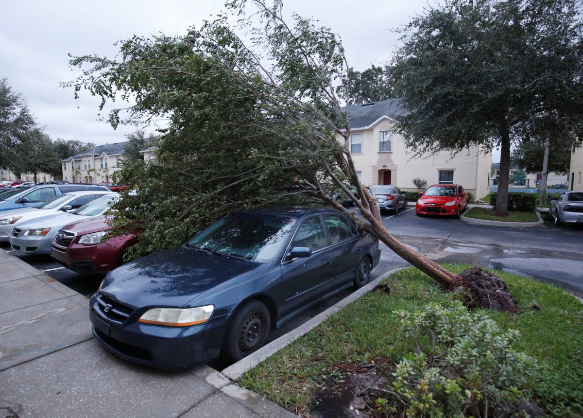 A tree sits atop two cars in wake of Hurricane Irma. Photo: Reuters/Gregg Newton