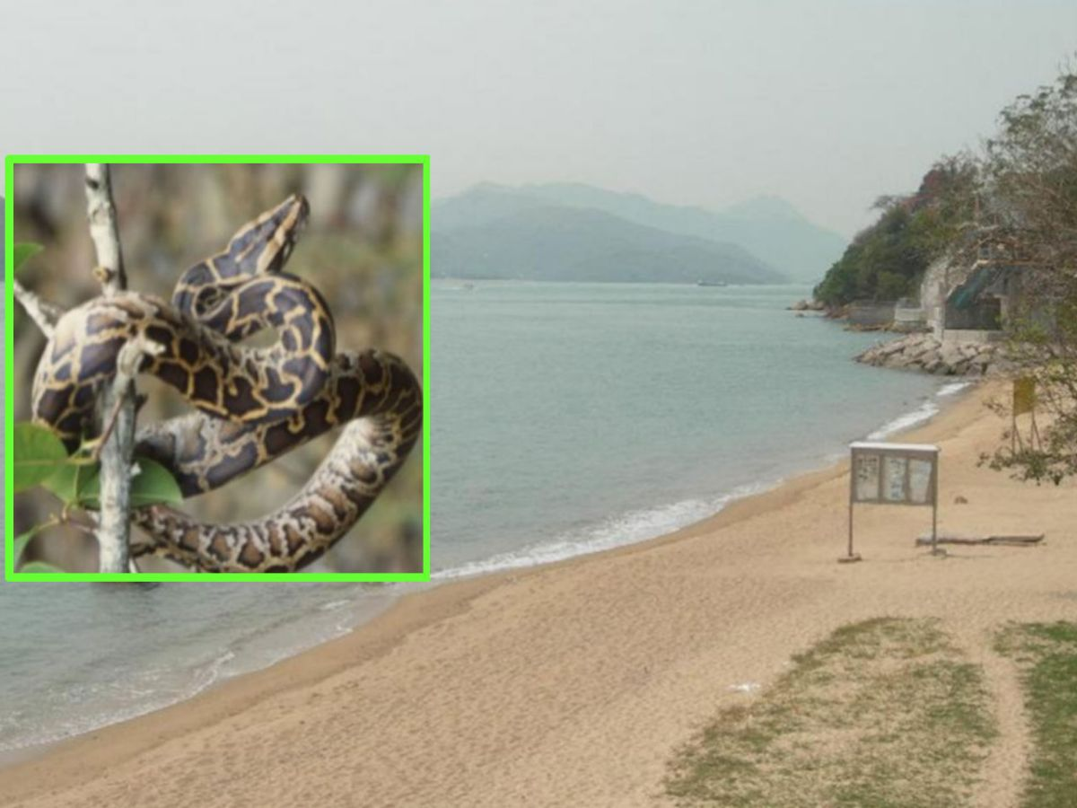 Angler's Beach in Sham Tseng, the New Territories Photo: LCSD, AFCD