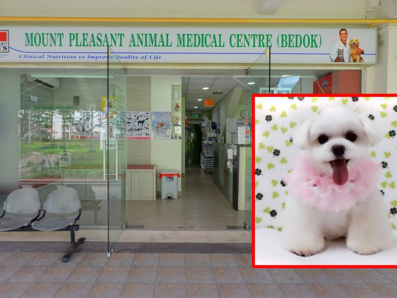 Mount Pleasant Animal Medical Centre in Bedok, Singapore, where the dog was taken for a veterinary examination. Photos: Google Maps, Facebook / Kiyo 婷婷