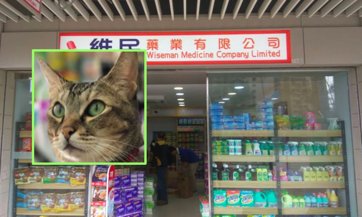 Marble (inset) is the shop cat at a pharmacy in Kwun Tong. Photos: Facebook, Wiseman Medicine, Roy Kwong