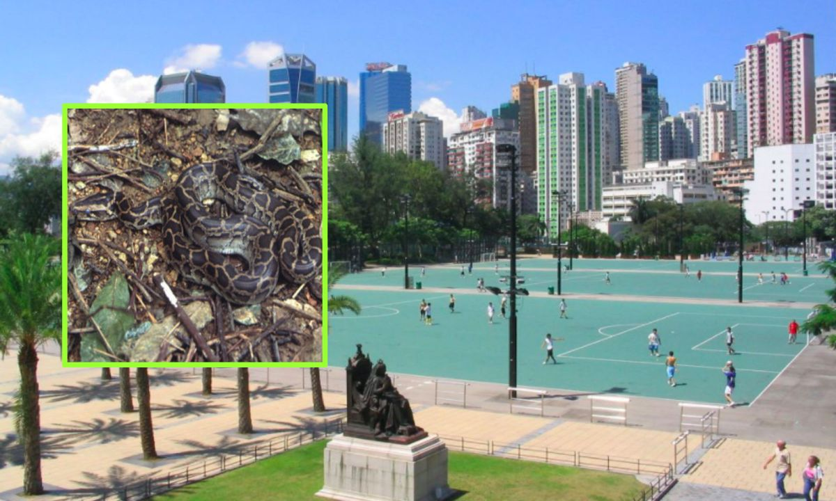 Victoria Park in Causeway Bay, Hong Kong Island. Photos: Wikipedia, Baycrest, Hong Kong Government