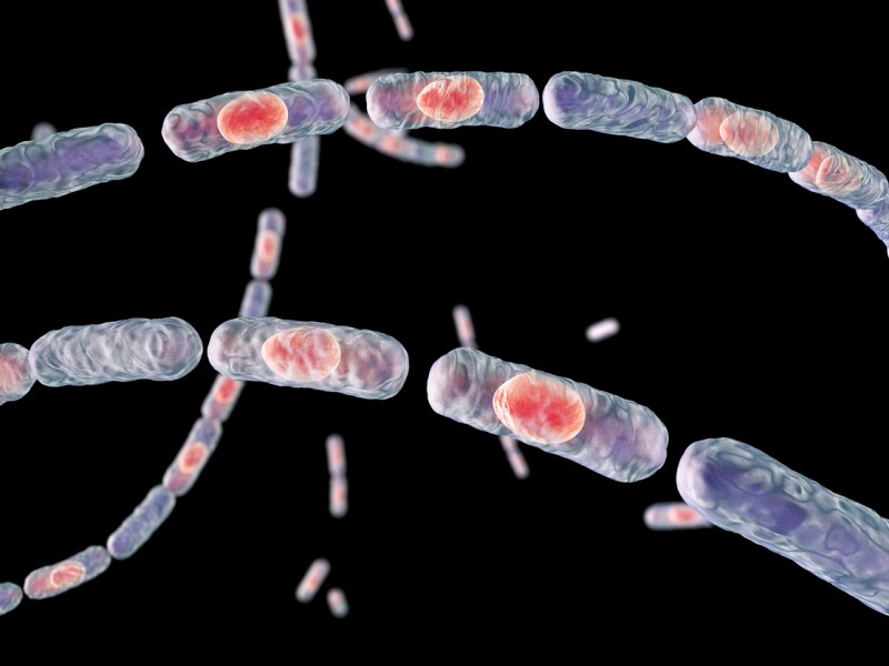 Bacillus anthracis. Photo: iStock / Getty