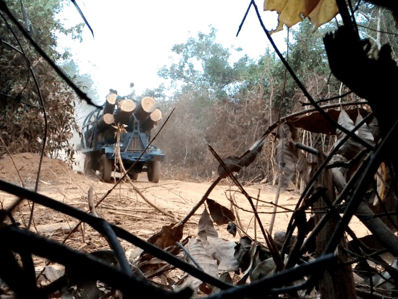 Timber smugglers drive illegally cut logs from Cambodia's Virachey National Park to the Vietnam border in February 2017. Photo: Environmental Investigation Agency