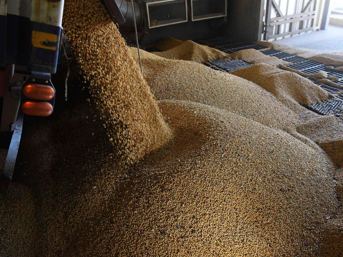 Soybeans. Photo: Reuters